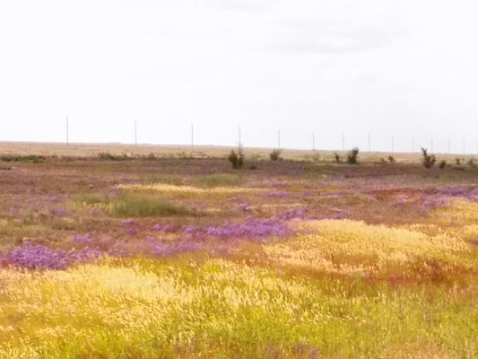 Blühende Steppe