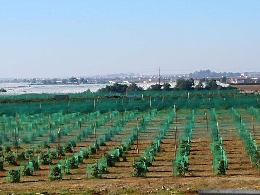 die fruchtbare Eben zwischen Assilah und Rabat