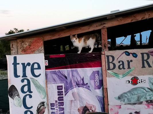 Die Katze kann schon mal die Bar besuchen