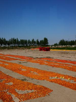 Aprikosendörren