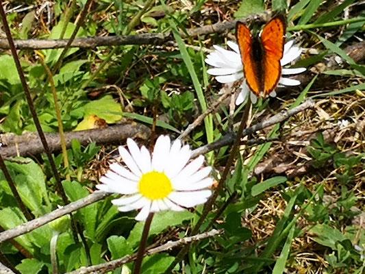 so ein schöner Schmetterling