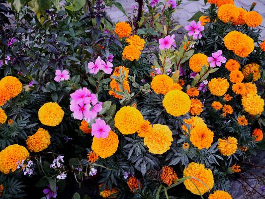 Tagetesblüte, auch orange