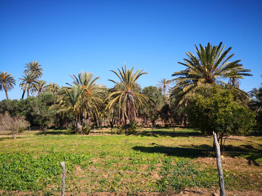 durch eine Palmenlandschaft mit Bananenstauden