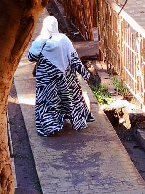 Mal wieder  ein Zebra