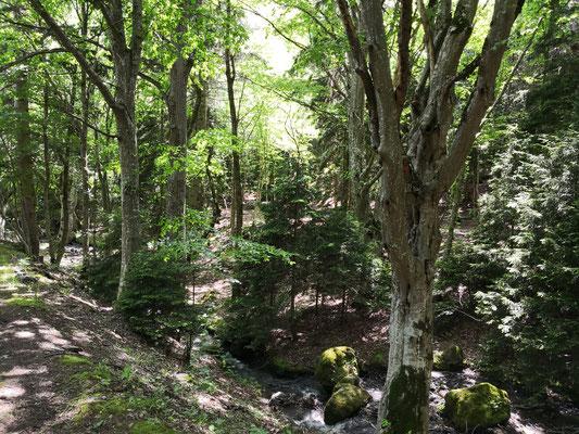 ein wundervoller Waldspaziergang zum Kloster