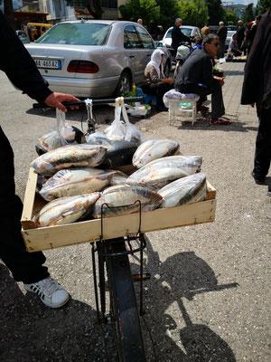 Der Fisch wird per pedes gebracht
