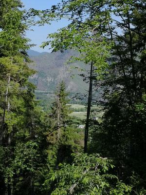 Fahrt durch Wald steil nach oben bis nach Bakuriani