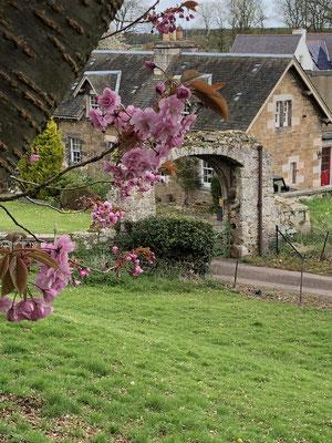 Blumen auf dem Gelände Dirleton Castle
