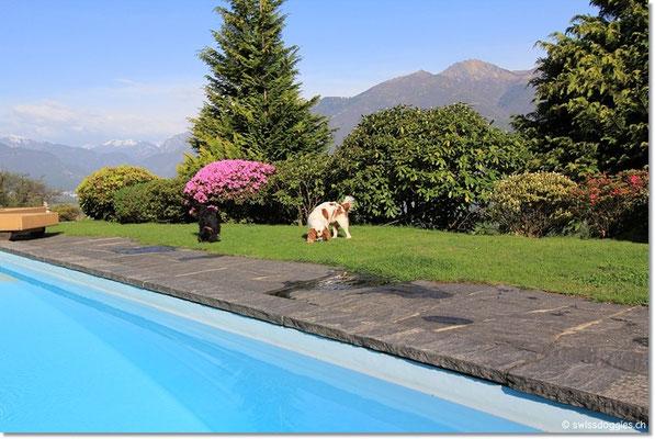 ...klar doch ein paar Trockenfutter-Häppchen werden im Garten versteckt... das weckt die doggies :)