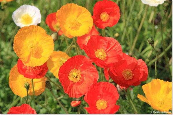 wunderschönen Blumen