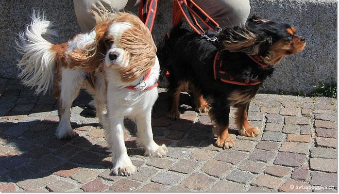 Die kleinen trotzden dem starken Wind.