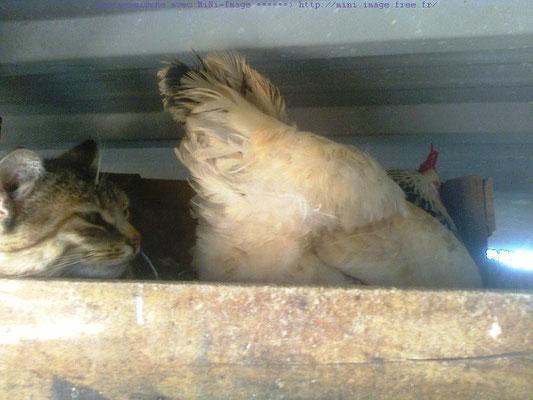 La gata a hecho su gatitos al dentro del ponedor de la gallina