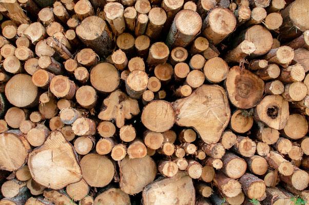 Aus dem Rohstoff Holz entsteht Ihr ökologisches Schwedenhaus