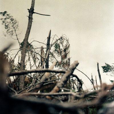 mémoire du bois © nathalie geoffray de calbiac
