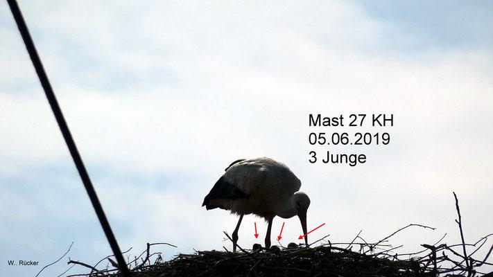 Altvogel und drei Jungtiere auf dem Strommasten