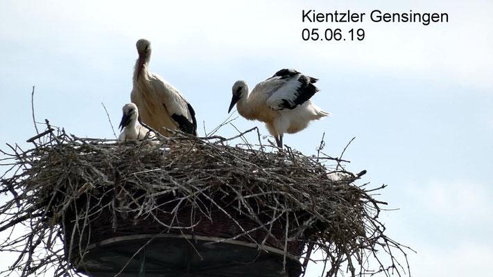 Altvogel in der Mitte mit zwei Jungvöglen auf einem Schornstein der Gärtnerei Kientzler