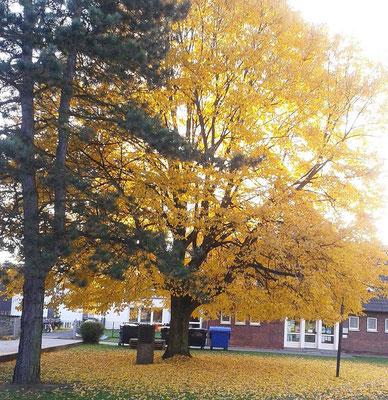Habitus im Herbstaspekt; Foto: Frau Renate Bosch, Presbyterin