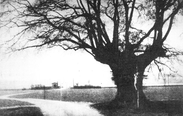 Das Krause Bäumchen um 1896, im Hintergrund das Bahnwärterhäuschen