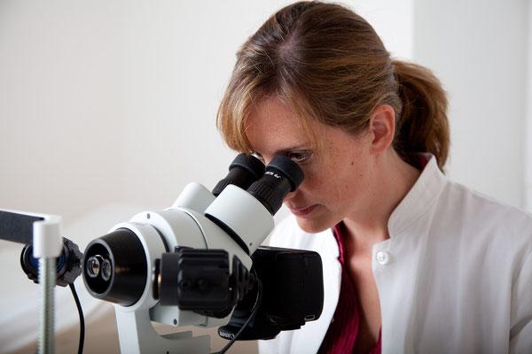 Irisdiagnose, Augendiagnose, Mikroskop, Praxis Haidhausen