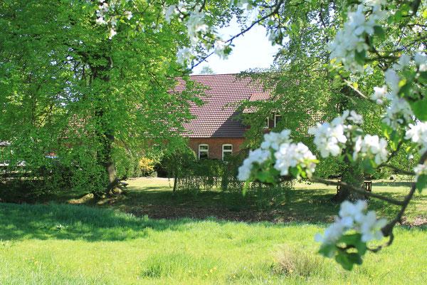 Ferienwohnungen und Gastpferdeunterbringung direkt am Hof.