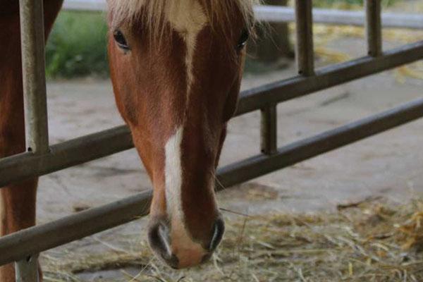 Pferde und Hunde sind willkommen!