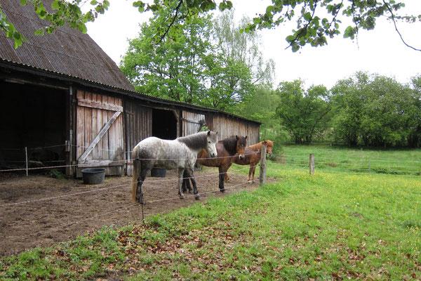 Paddocks und Weiden stehen zur Verfügung.