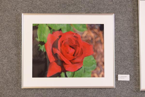 Platz 56 Brunneder Rudi - Rote Rose 1