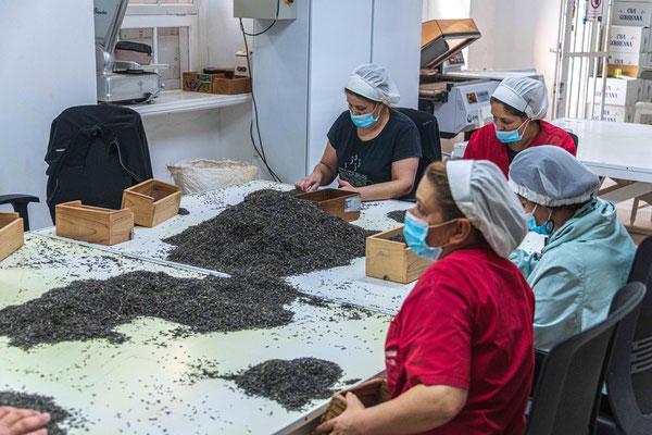 Teefabrik Cha Gorreana, Handsortierung