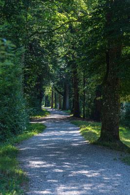 Wanderweg Tössrain
