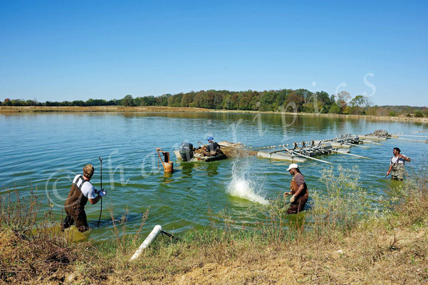 Catfish Farm bei Greensboro