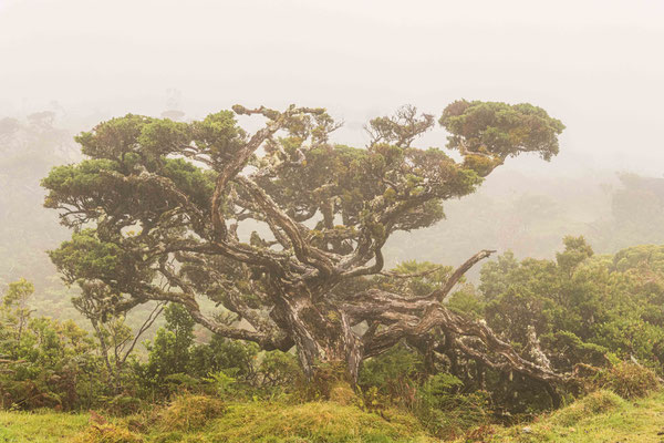 Hochland im Nebel
