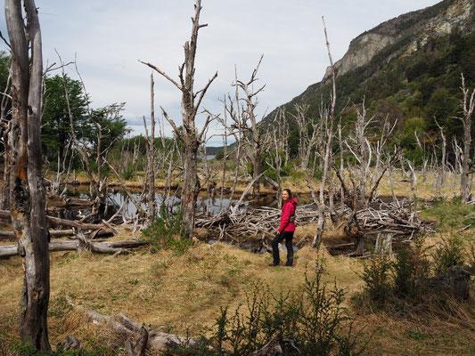 Eine Wanderung im Nationalpark Tierra del Fuego führt dich an verwunschene Orte