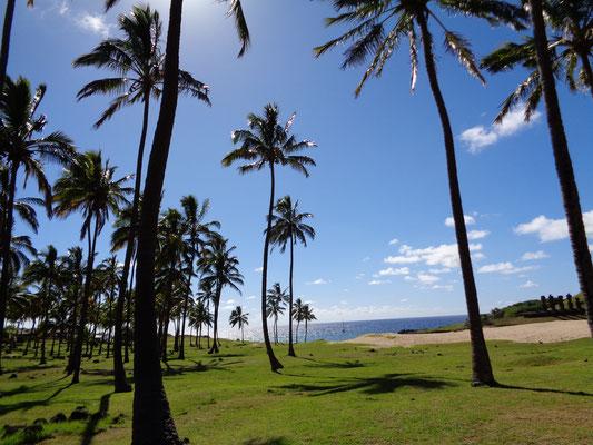 Der einzige Strand der Osterinsel: Anakena
