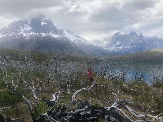 Inmitten abgebrannter Bäume am Lago Pehoe, am Fuße der Cuernos del Paine