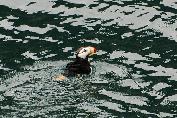 Hornlund (Alaska, Juli 2008)