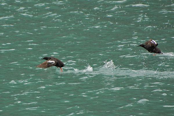 Taubenteisten (Alaska, Juli 2008)