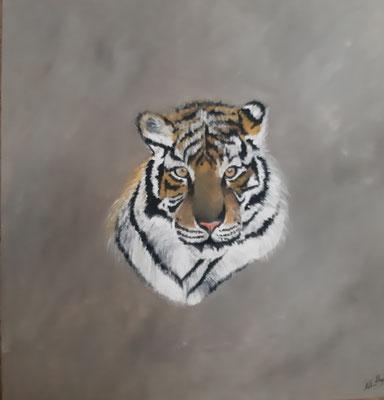 Tigre / 60 x 60 cm/ Huile / Prix : 150 euros