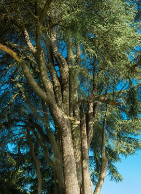 Tronc, sommet, feuilles