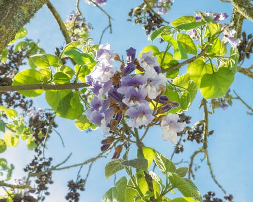 Branches, fleurs, feuilles