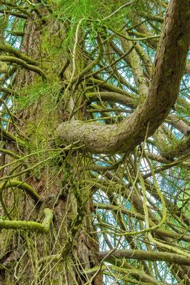 Branches au sommet