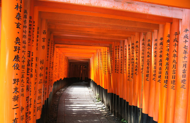 torii gates im fushimi inari shrine