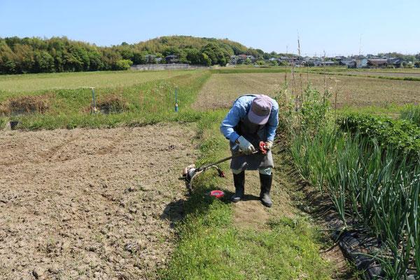 先生の草刈り作業状況