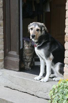 Zur Familie Goosmann gehören auch Hund und Katze, die Ferienwohnung ist ebenfalls hundefreundlich.