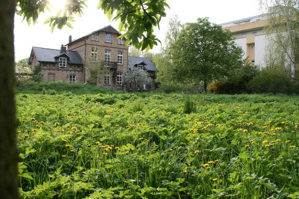 Der Reitersdorfer Park mit Teichen und viel Grün liegt um das Haus der Familie Goosmann in Bad Honnef.