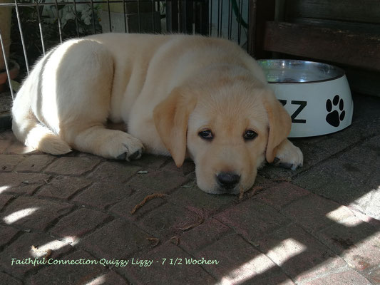Faithful Connection Quizzy Lizzy *Betty* - 7 1/2 Wochen