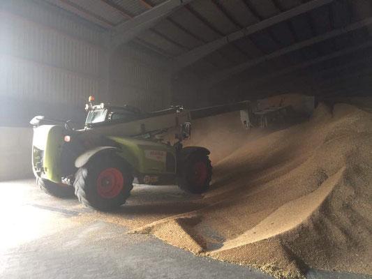 Eine der 5 Boxen in der Halle, tlw. mit Weizen befüllt.
