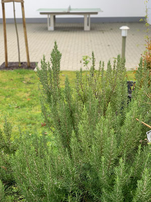 Blick aus dem Garten Ziegelweg 6