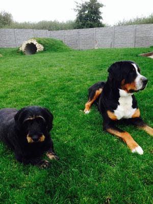 Lotta und Duke