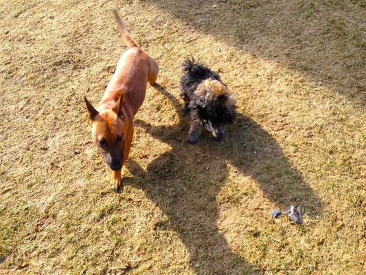 Mila und Peanut