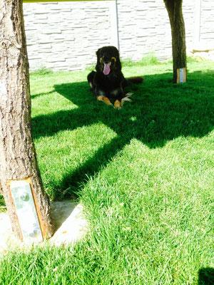 Aisha: Schatten!!!